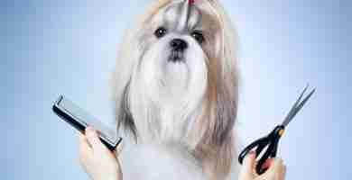 Curso Peluquería Canina